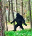 Bigfoot Roaming in Uncertain