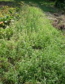 Weeds? What weeds? – My East Texas
